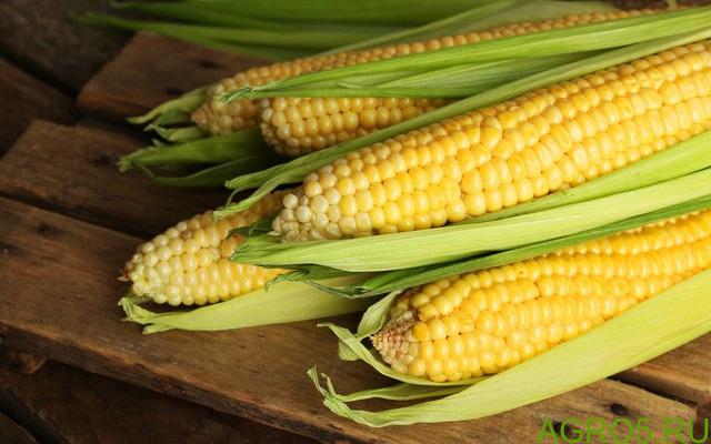 Сахарная кукуруза в Славянске-на-Кубани