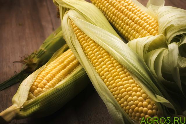 Сахарная кукуруза в Соль-Илецке