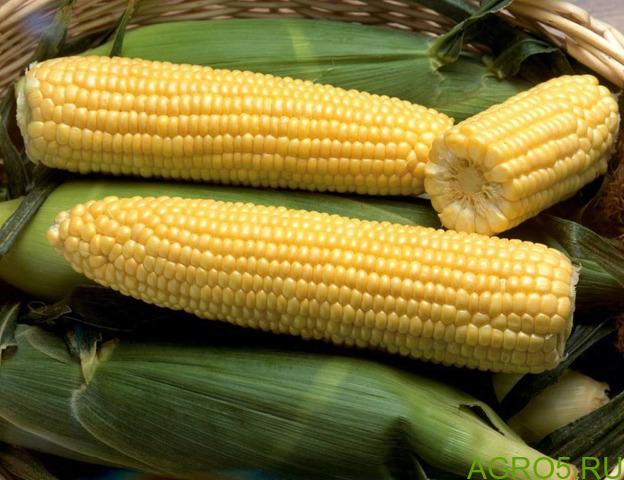 Сахарная кукуруза в Хабаровске