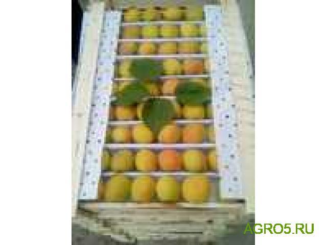 ПРЕДЛАГАЮ абрикос
