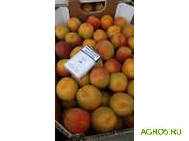 ПРЕДЛАГАЮ абрикос сорт шалох