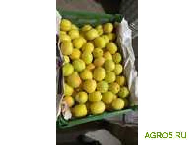 ПРЕДЛАГАЮ абрикос сорт Юбилейный (лимонка)