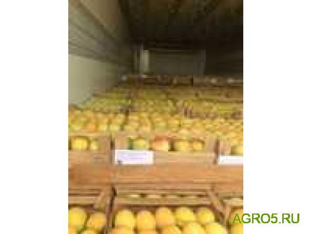 ПРЕДЛАГАЮ абрикос Юбилейный (лимонка)