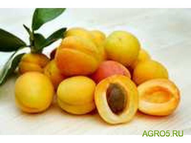 свежий абрикос Юбилейный