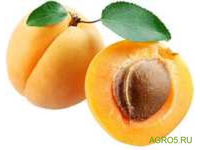 Продам абрикос сорт Юбилейный (лимонка)