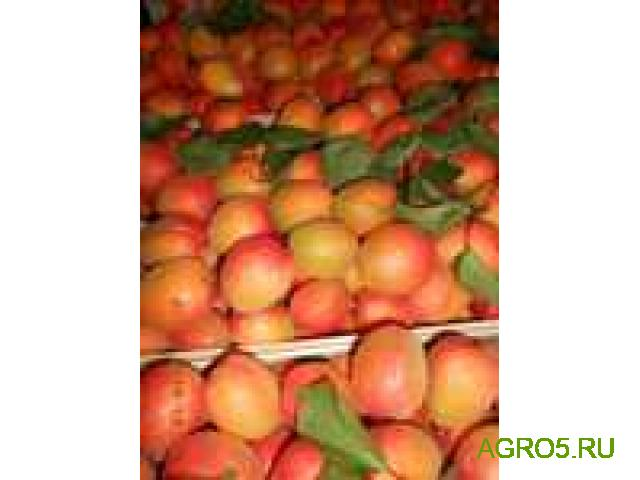 Продам абрикос Юбилейный (лимонка)