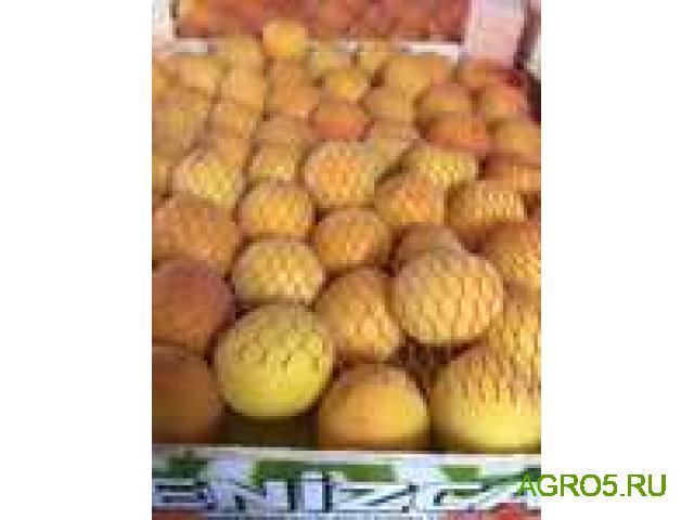 Экспорт абрикос шалох