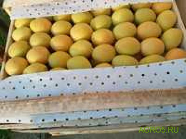 Экспорт абрикос сорт Юбилейный (лимонка)