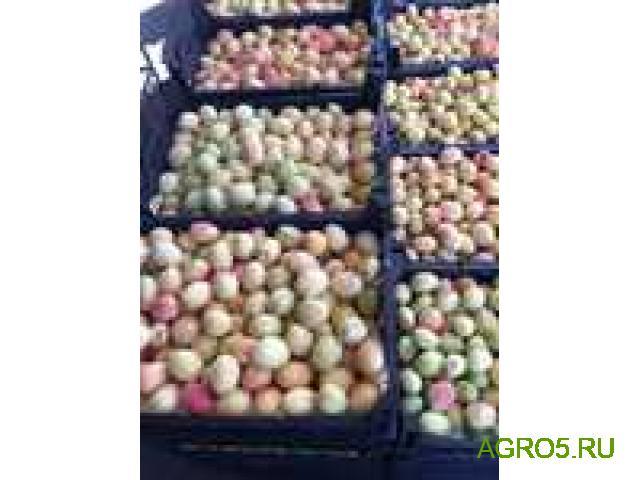 Экспорт абрикос Юбилейный (лимонка)