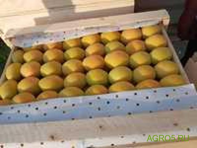 Предлагаем абрикос