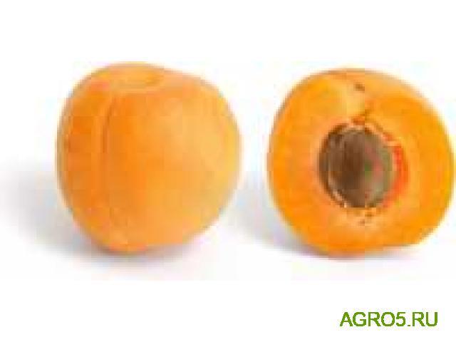 Предлагаем абрикос шалох