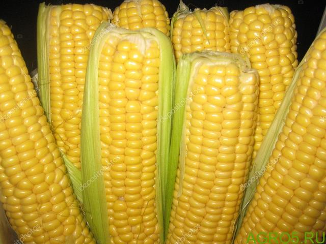 Сахарная кукуруза в Крымске
