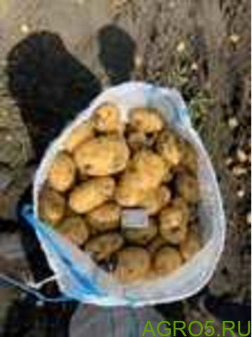 Картофель в Новосибирске
