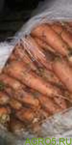 Морковь в Алексеевке