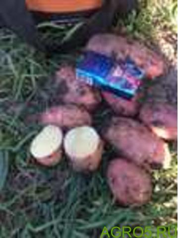 Картофель в Усть-Лабинске