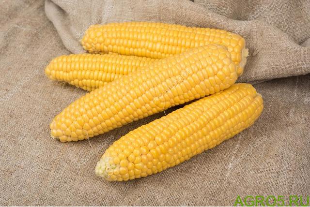 Сахарная кукуруза в Зеленограде