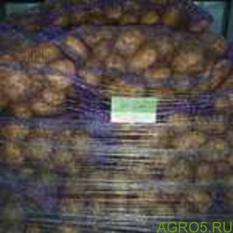 Картофель в Кургане