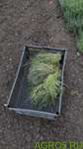 Зелень в Белореченске