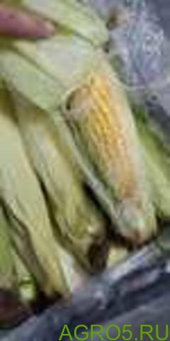 Сахарная кукуруза в Мытищах