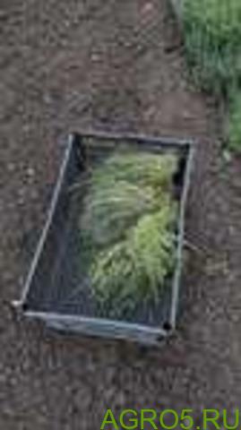 Зелень в Туле