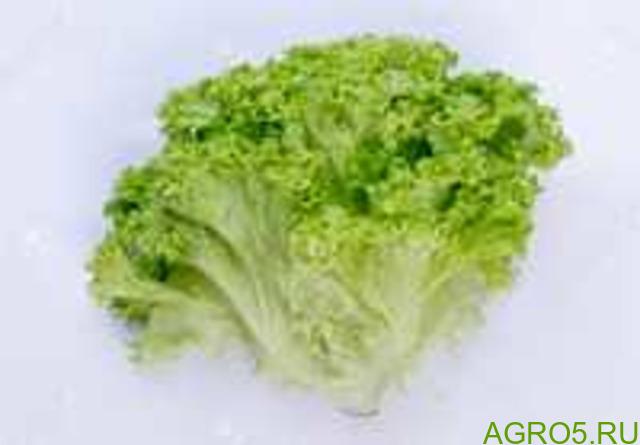 Зелень в Ипатово