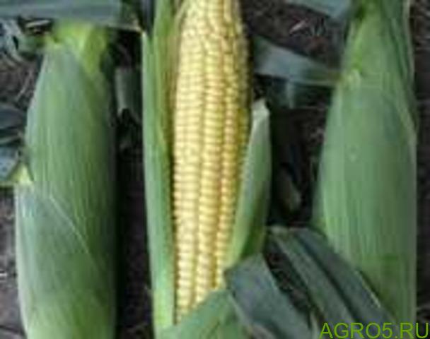 Сахарная кукуруза в Симферополе
