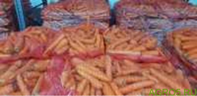 Морковь в Турции