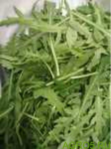 Зелень в Внуково