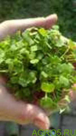 Зелень в Вологде