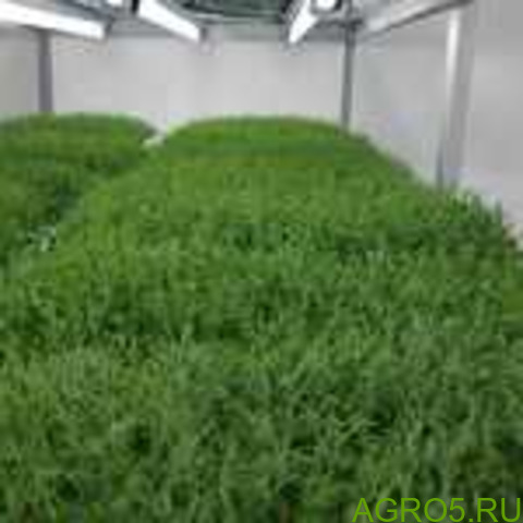 Зелень в Омске