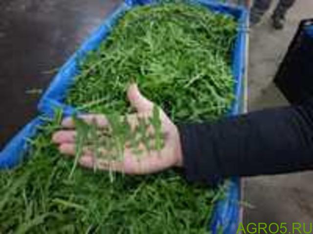 Зелень в Узбекистане
