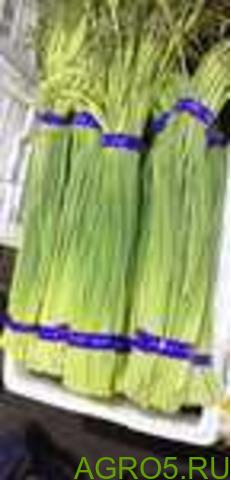 Зелень в Истре