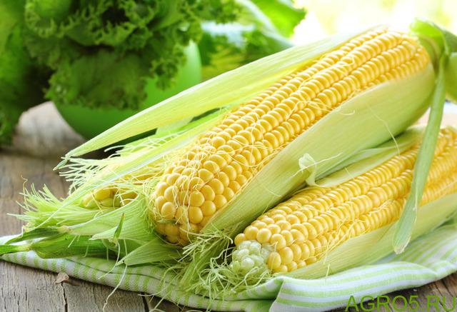 Сахарная кукуруза в Шереметьево