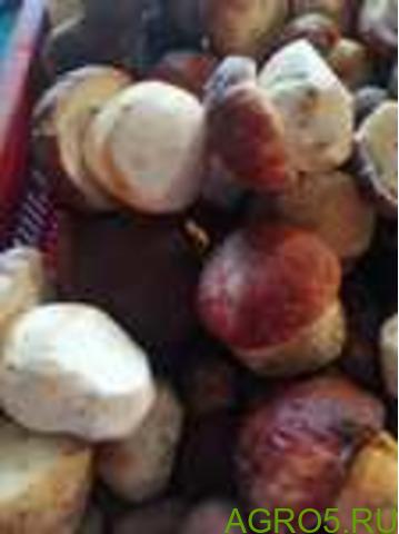 Замороженые белые грибы