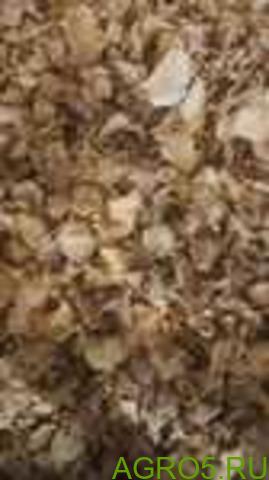 Лисичка сушеная