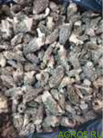 Сморчок сушёный конический (коника)
