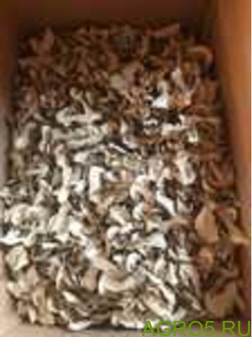 Белый гриб сушеный