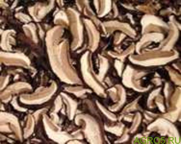 ЛЕСНЫЕ БЕЛЫЕ сушеные грибы