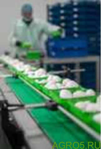 Грибы шампиньоны свежие производство РБ
