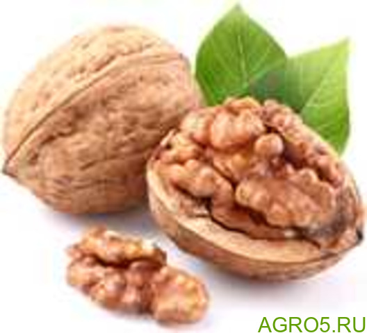 Грецкие орехи оптом