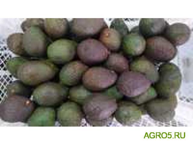 Авокадо сезон 2020