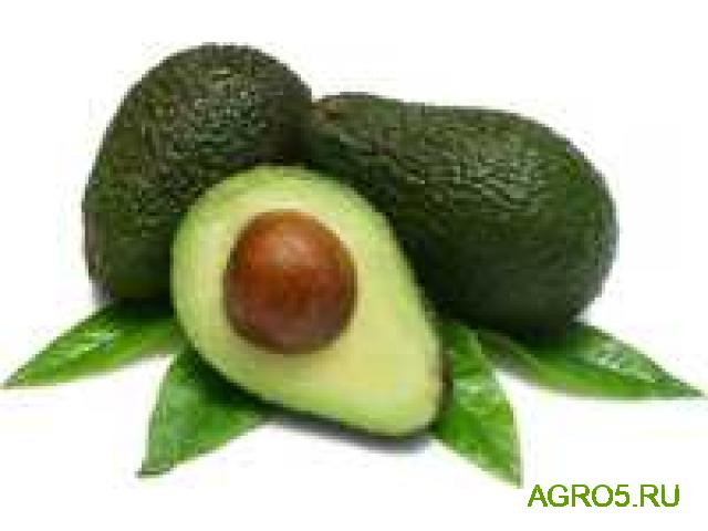 Авокадо от производителя
