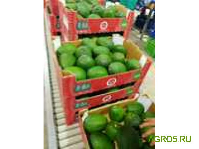 Авокадо свежий