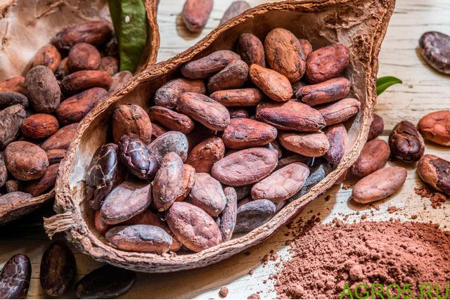 Какао порошок Барри Калебаут (1 кг)