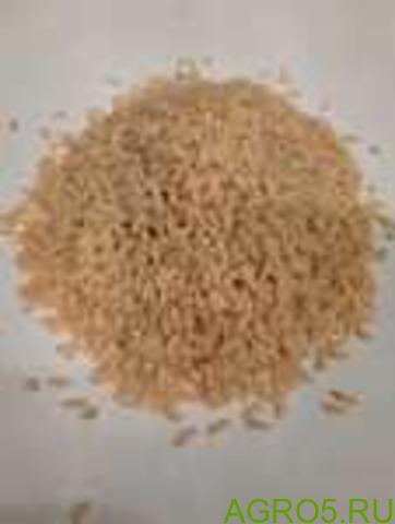 Рис лазер нешлифованный