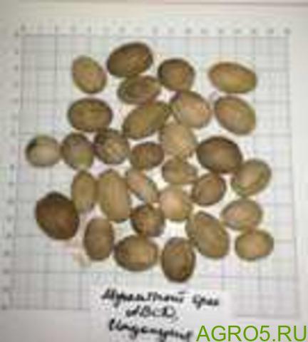 Мускатный орех целый ABCD. Индонезия
