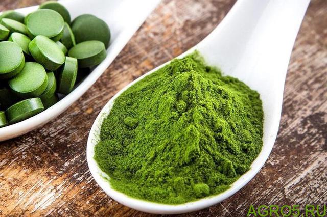 Хлорелла - пищевая водоросль