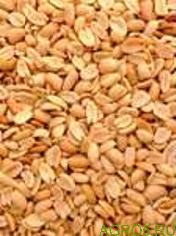 Арахис жарено-соленый