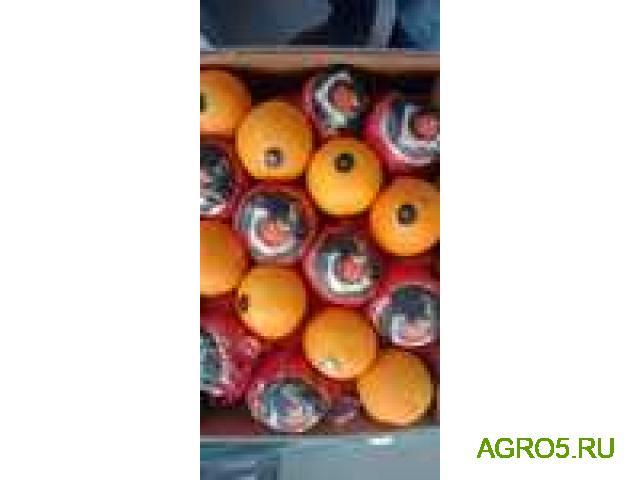 Апельсины Египет высокого качества