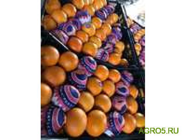 Апельсины на сок от производителя